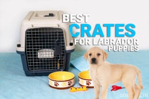 best crates for labrador puppy