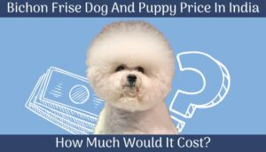 Bichon Frise Dog and Puppy Price In India