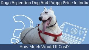 Dogo Argentino Dog And Puppy Price In India